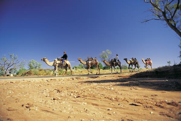 Camel trek, Silverton: a great place to visit in New South Wales.  Image © Hamilton Lund; Destination NSW. This photo sponsored by Environment & Sustainability Management Category.