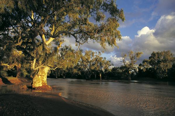 Namoi River: a great place to visit in New South Wales.  Image &copy Nick Rains; Destination NSW. This photo sponsored by Restaurants - Australian Category.