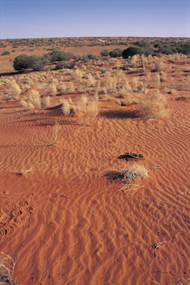Desert landscape, Sturt National Park: a great place to visit in New South Wales.  Image &copy Destination NSW; Sally Mayman. This photo sponsored by Lawyers Category.