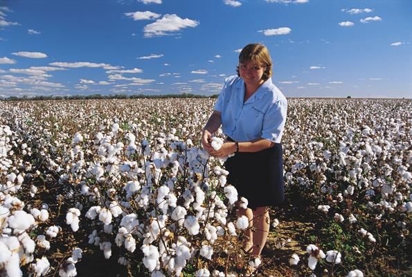 Moree cotton fields: a great place to visit in New South Wales.  Image © Unknown Photographer; Destination NSW. This photo sponsored by Fashion Accessories - Importers and-or Wholesalers Category.