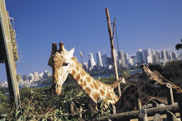 Taronga Zoo, Sydney: a great place to visit in New South Wales.  Image &copy Sally Mayman; Destination NSW. This photo sponsored by Playground Equipment Category.