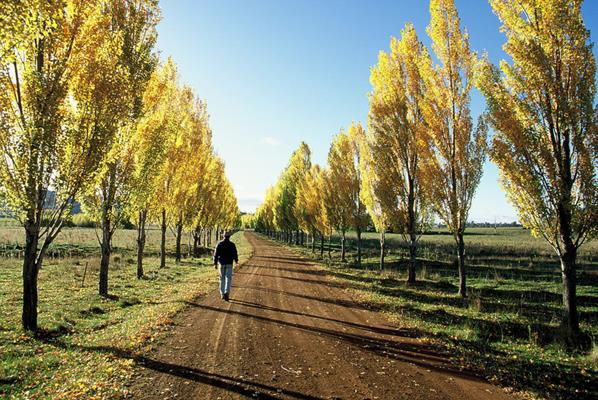 Countryside, Glen Innes: a great place to visit in New South Wales.  Image © Destination NSW. This photo sponsored by Hotels Category.