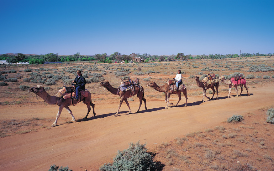 Camel treking -Silverton: a great place to visit in New South Wales.  Image © Hamilton Lund; Destination NSW. This photo sponsored by Blinds Category.