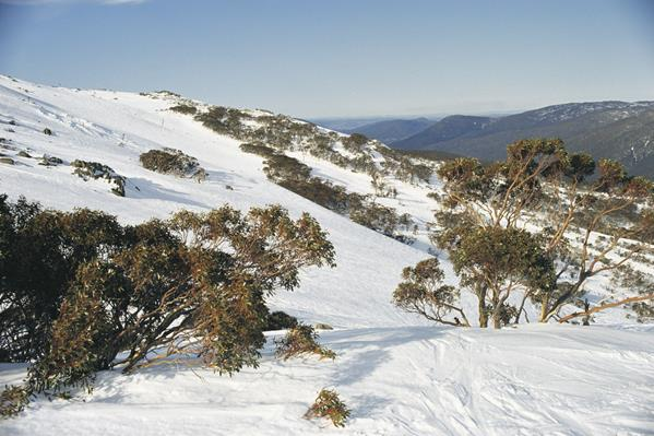Kosciuszko NP, Snowy Mountains: a great place to visit in New South Wales.  Image © Destination NSW. This photo sponsored by Dentists Category.