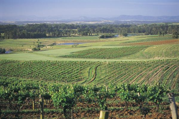 Hunter Valley countryside: a great place to visit in New South Wales.  Image &copy Destination NSW. This photo sponsored by Pest Inspections Category.