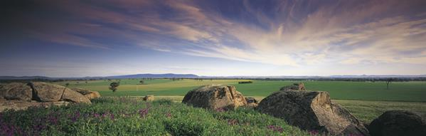 Landscape, Young: a great place to visit in New South Wales.  Image &copy Destination NSW. This photo sponsored by Building Maintenance Category.